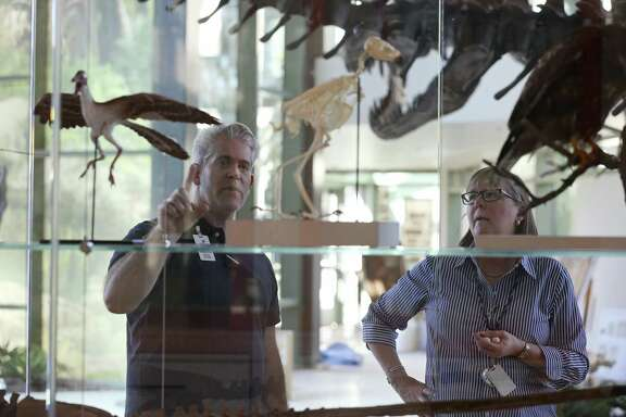 Witte Museum Curator of Paleontology and Geology Thomas L. Adams, left, and Helen Holdsworth, curator of Texas Wild, check out exhibits in the Naylor Family Dinosaur Gallery and Dinosaur Lab, Tuesday, Feb. 21, 2017.