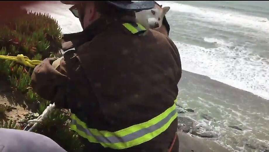 A dog needed to be rescued by firefighters on Wednesday. Photo: San Francisco Fire Department