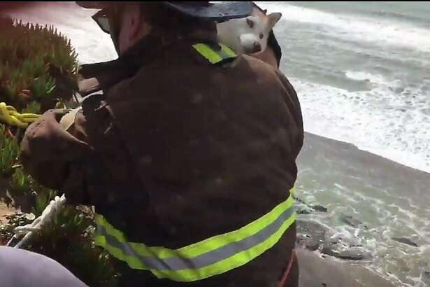 A dog needed to be rescued by firefighters on Wednesday.