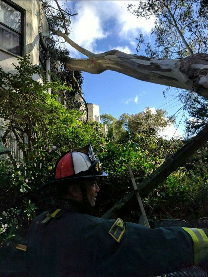 The San Francisco Fire Department responded when a 100-foot tree fell on a house in West Portal on Wednesday. Photo: San Francisco Fire Department / San Francisco Fire Department
