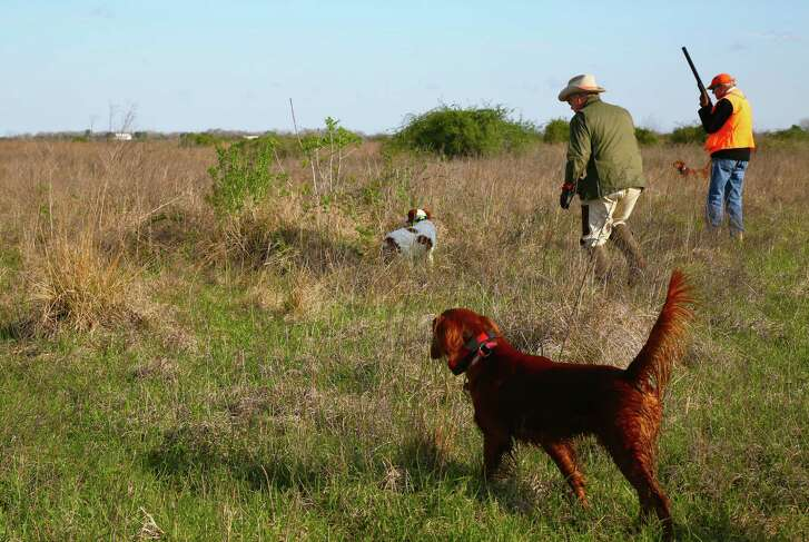 Bobwhite quail - and quail hunters - are among the beneficiaries of Wildlife Habitat Federation's cooperative efforts with private land- owners to restore native grasslands and other crucial upland habitat on Texas' coastal prairies and oak savannah regions.