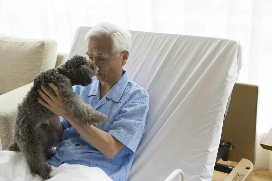 You likely won't be able to bring your pet with you if you are hospitalized, so it's important to have a plan in place for your furry friend, just in case. Photo: Absodels RM /Getty Images / This content is subject to copyright.