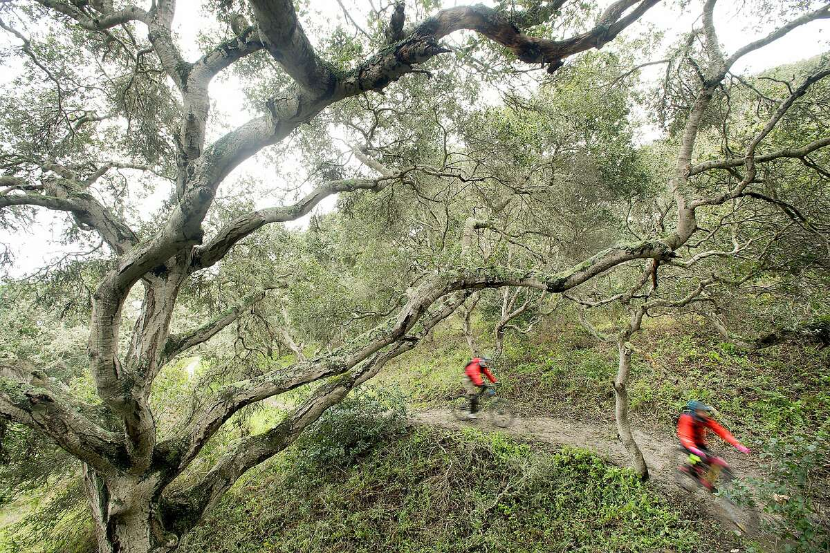 Mountain bikers navigate a trail at the Fort Ord National Monument on Saturday, Feb. 18, 2017, near Salinas, Calif.