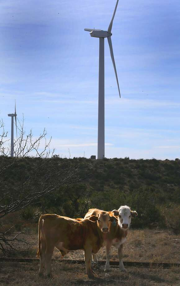 Cattle roam on a mesa near Iraan, Texas on the site of the Desert Sky Wind Farm.  The site in cludes 107 turbines, each rated at 1.5 megawatts (1,500 kilowatts) spread over a 15-square-mile area . Photo: John Davenport / San Antonio Express-News / ©San Antonio Express-News/John Davenport