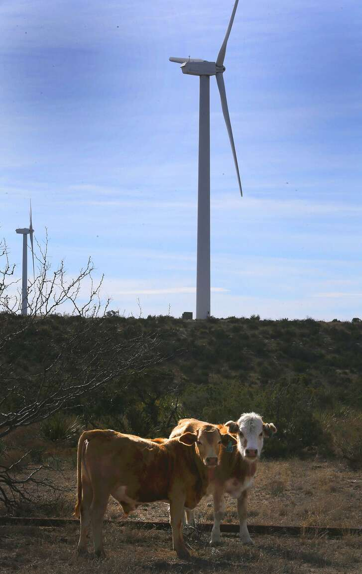 Cattle stand in front of a wind turbine at the Desert Sky wind farm in West Texas. San Antonio's CPS Energy buys the power from the wind farm.
