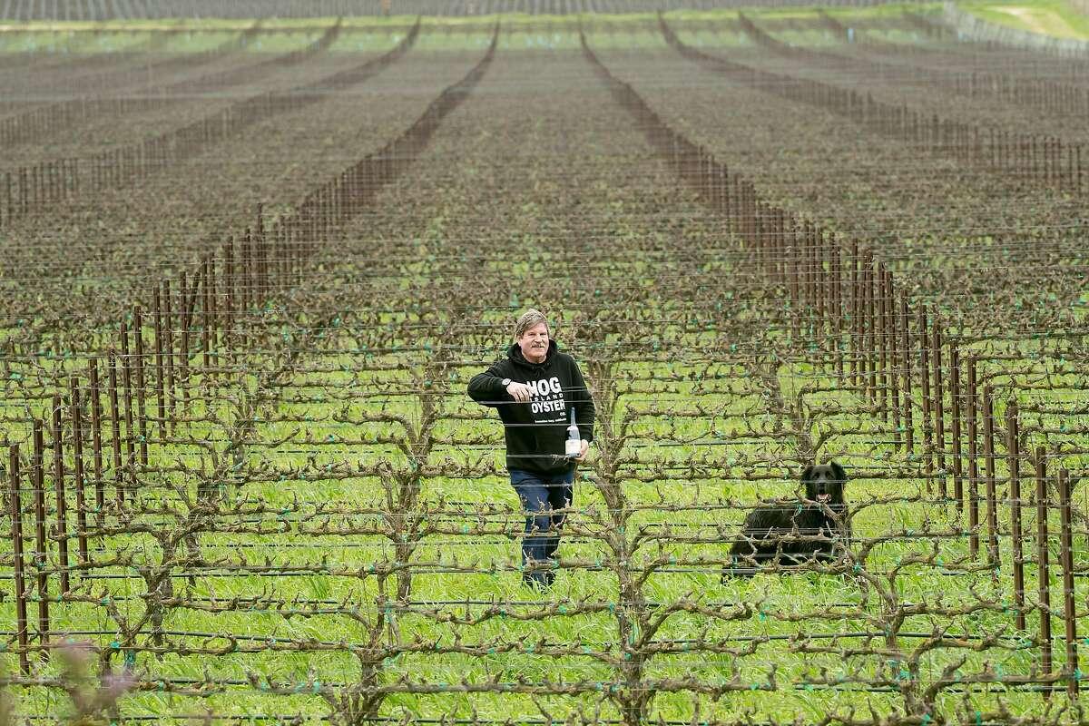 Dan Morgan Lee and his dog Hudson stand among vines at Morgan Winery in Salinas, Calif., on Sunday, Feb. 19, 2017.
