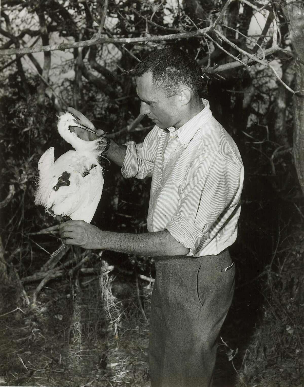 David Perlman - October 12, 1955 - Marin Is. off San Rafael. S.F. Bay.