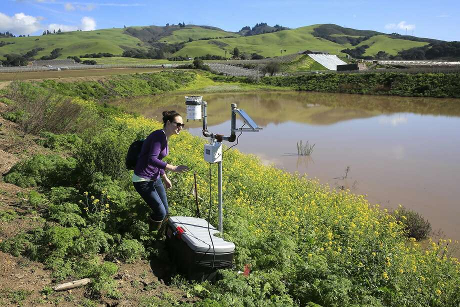 Sarah Beganskas, a UC Santa Cruz earth sciences hydrology student, walks along the bank of a groundwater recharge basin to take the reading on a rain gauge. Photo: Michael Macor, The Chronicle