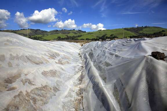 Rain water collected in the hills above Watsonville, Ca. is transported through a series of plastic lined dirt canals to the groundwater recharge basin down below, as seen on Friday February 24, 2017. It is hoped that more groundwater basins can be built to replenish the aquifers down below.