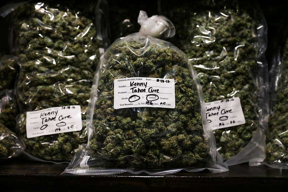 Marijuana strain Tahoe Cure, is stashed in the stock room at The Green Cross in San Francisco. Photo: Gabrielle Lurie, The Chronicle