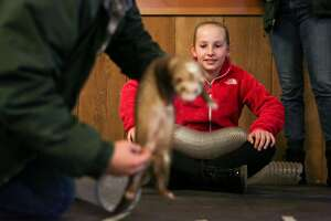 2nd place winner Reagan Poland, 11, participates in a demonstration where a ferret walks through a tunnel at the 35th annual middle school science fair award ceremony held at the San Francisco Zoo on Saturday, February 25, 2017 in San Francisco, Calif.