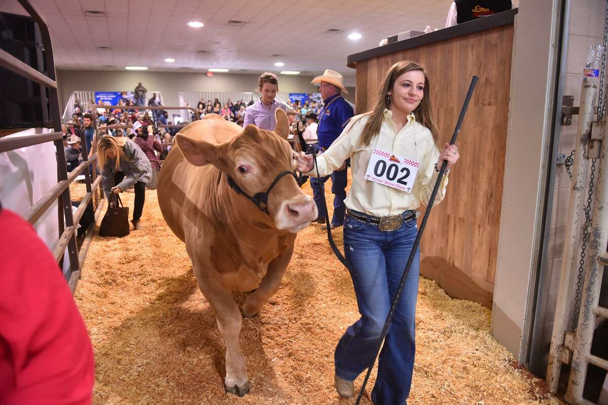 Sydni Ellisor and her San Antonio Stock Show and Rodeo Reserve Grand Champion Steer Moose leave the auction arena in 2017 after Moose brought in $72,000.