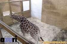 Animal Adventure Park/YouTube