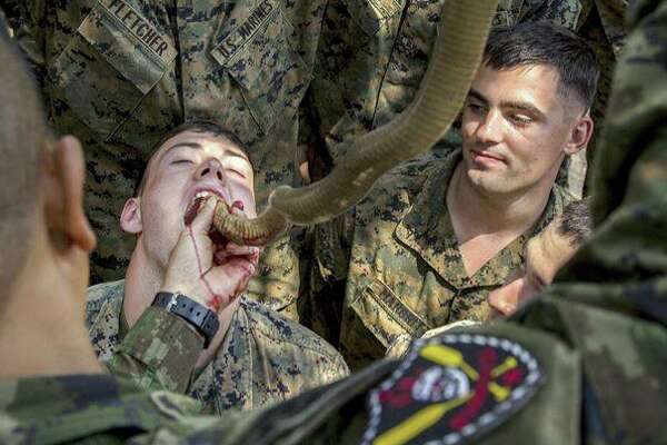 "Department of Defense via Facebook: ""Snake Eaters! #Marines drink cobra blood during #CobraGold17 at Camp Ban Chan Krem, Thailand. Troops can use cobra blood and flesh as nutrition where sustenance is scarce."""