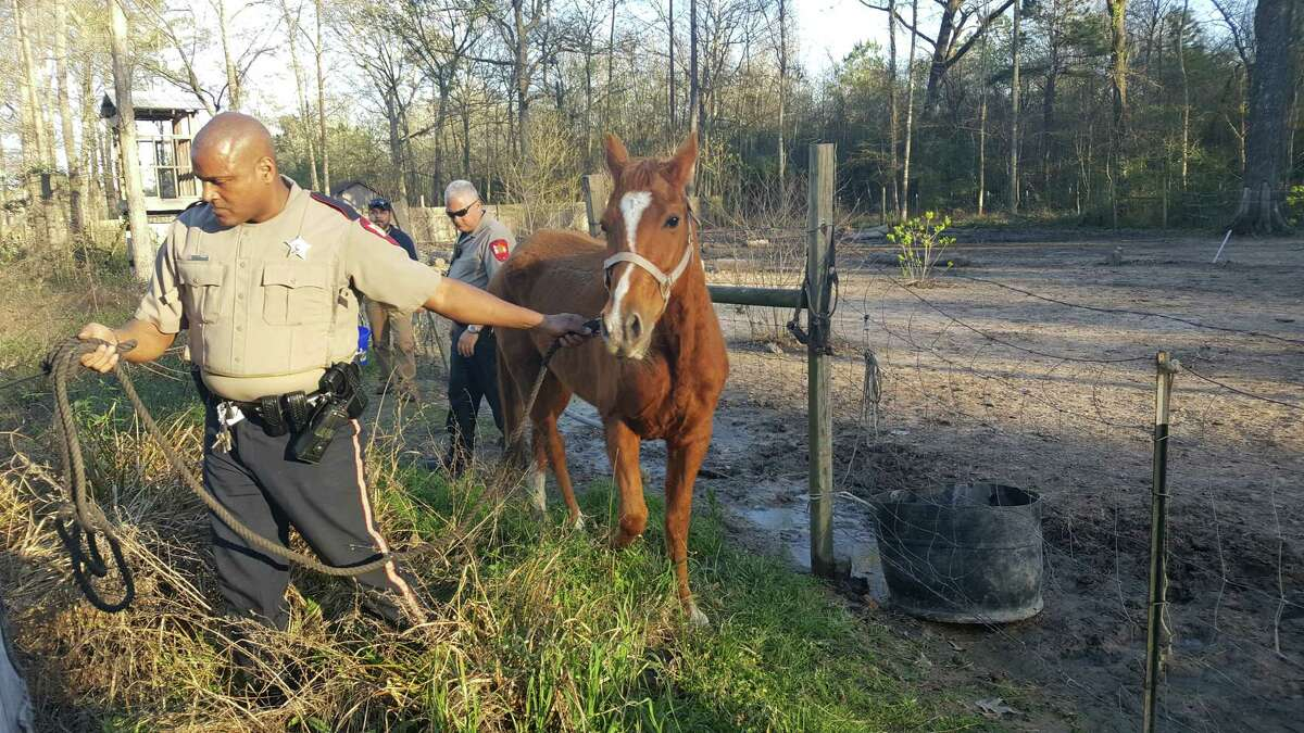 A 46-year-old New Caney man was arrested Thursday for allegedly neglecting several dogs and a horse for months.