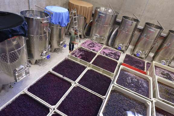 Grapes fermenting at Lewis Wines in Johnson City.