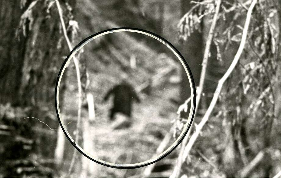 Close-up image of still purported to be Bigfoot, from a roll of film left at a San Francisco camera shop and never picked up. / ONLINE_YES