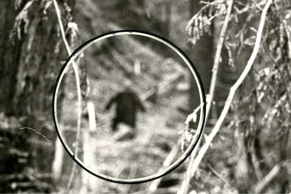 Close-up image of still purported to be Bigfoot, from a roll of film left at a San Francisco camera shop and never picked up.