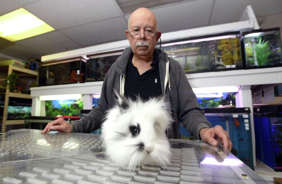 """Fish Bowl pet store owner Tony Aversano with a Lionhead bunny, a breed he sales at his Hope Street store in Stamford on Feb. 24, 2017. Aversano is upset about the city's new animal control ordinance which restricts the sales of rabbits a month before Easter. According to Aversano, """"The city's passage of an ordinance does little to benefit rabbits and bunnies by restricting conscientious long time operators like him."""" Photo: Matthew Brown / Hearst Connecticut Media / Stamford Advocate"""