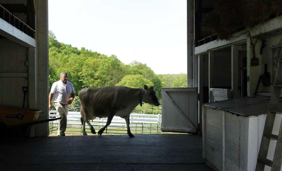 Mike Murray, farm manager at New Pond Farm in Redding, Conn. Photo: Carol Kaliff / Carol Kaliff / The News-Times