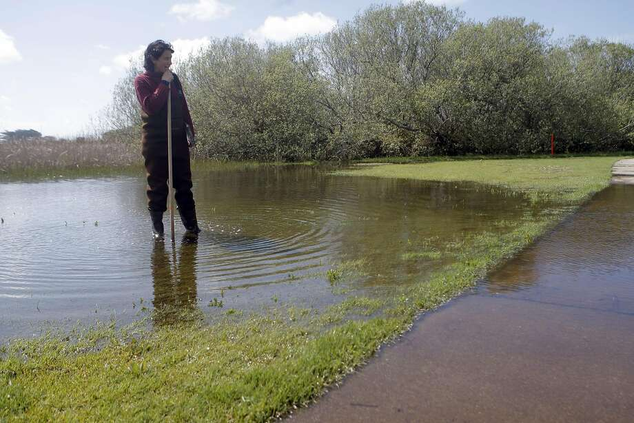 Lisa Wayne, Natural Areas Program Director at S. F. Recreation and Park, surveys newly flooded areas of Sharp Park Golf Course searching for California Red-legged frogs and eggs in Pacifica, Calif., on Monday, March 21, 2011. Photo: Thomas Levinson, The Chronicle
