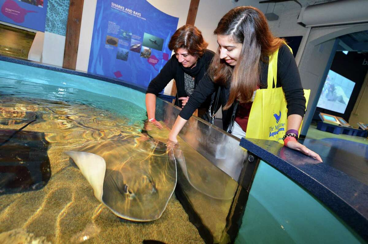 Educator Mariela Schriel with Naramake School and her daughter, Paulina, from Brookside Elementary School look at a Southern Ray at The Maritime Aquarium.