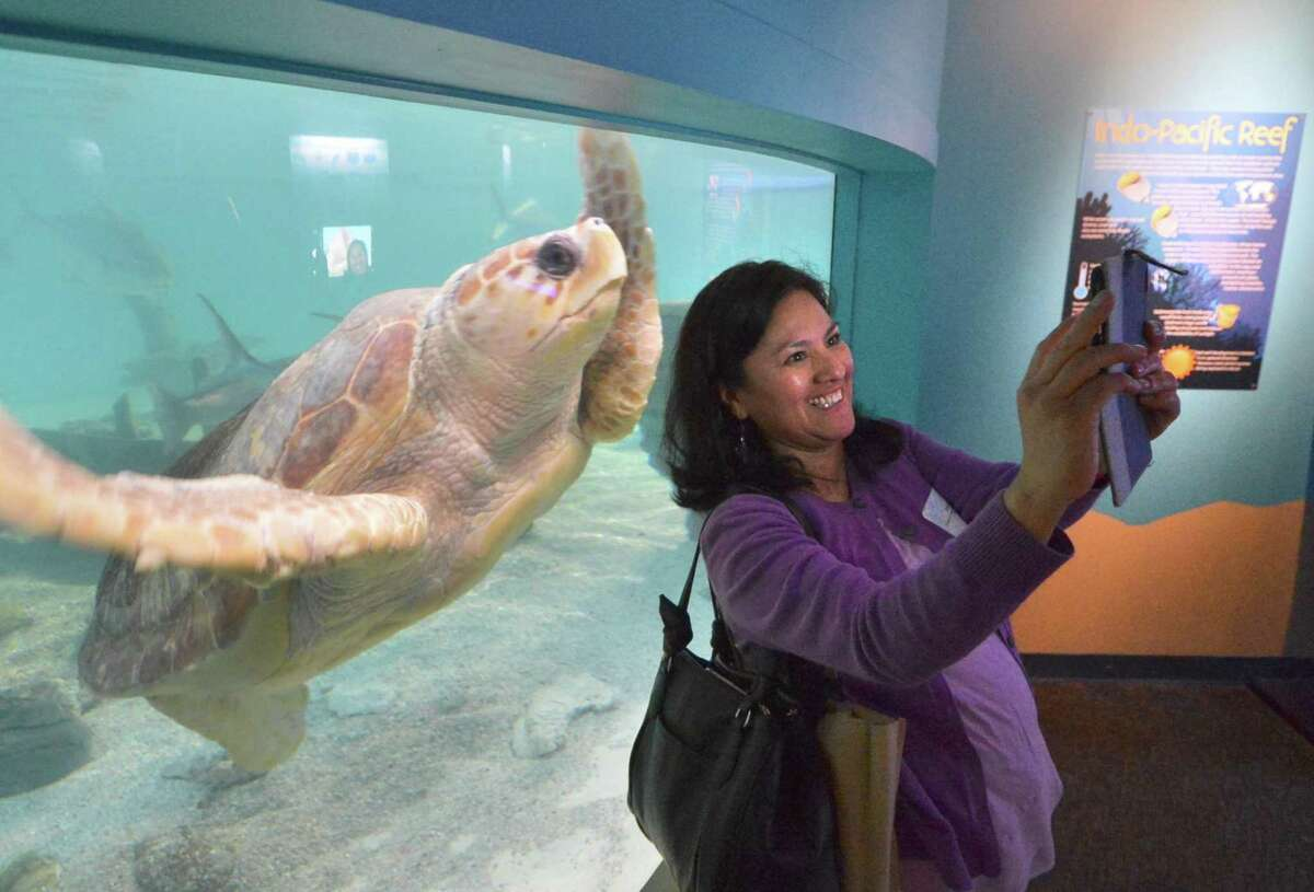 Educator Patricia Pitts with The Childrens Learning Center of Fairfield County in Stamford laughs as a sea turtle photo bombs her selfie during a tour of the exhibits as teachers were invited to
