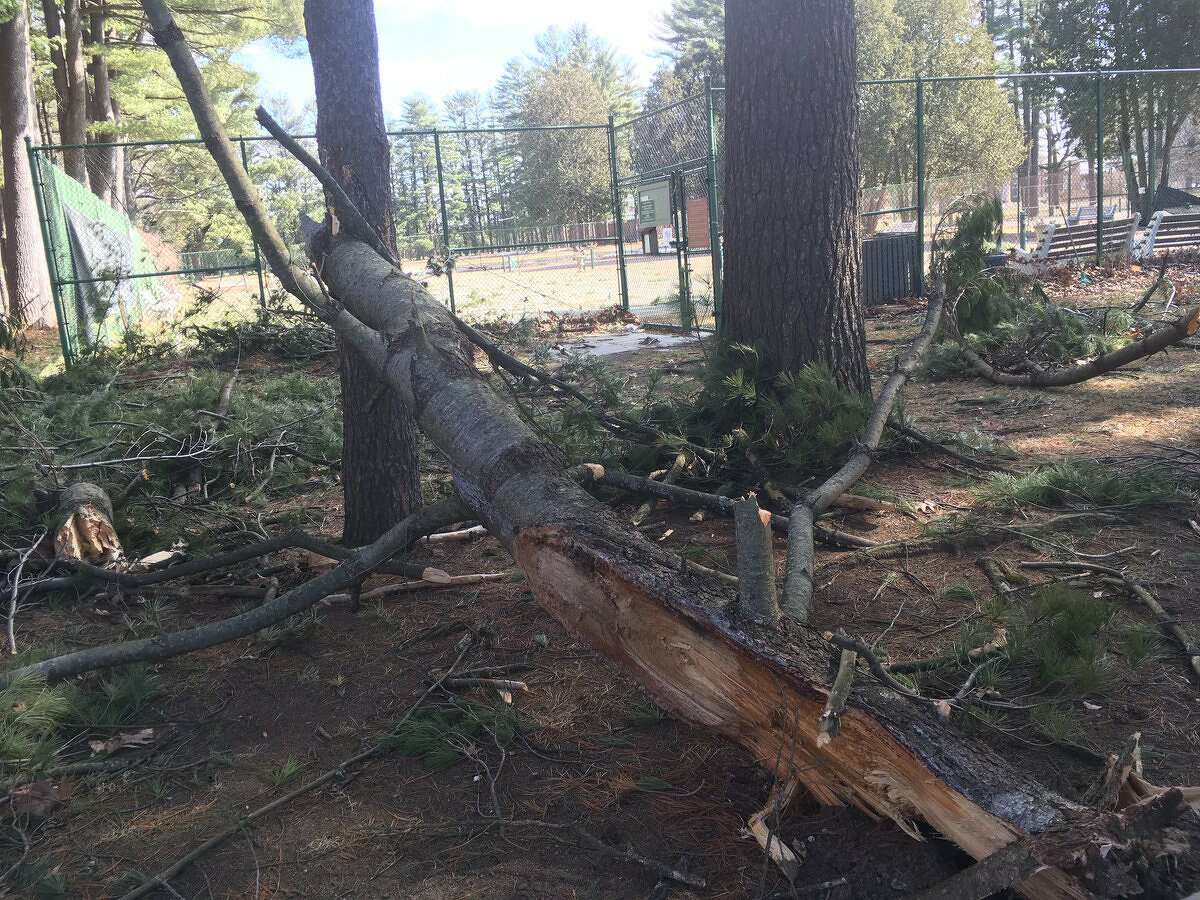 A pine tree brought down by strong winds on Thursday damaged a tennis court in the Saratoga Spa State Park on Thursday. (Wendy Liberatore / Times Union)