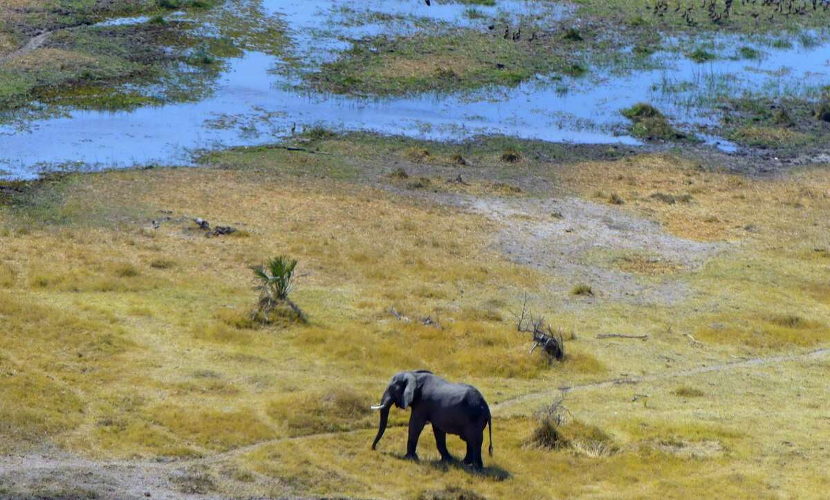 This Sept. 2, 2016 aerial photo taken from a helicopter shows an elephant making its way across mixed Okavango Delta terrain during Botswana's dry season. The Delta is a diverse region made up of islands, rivers, tree lines and waterholes with some areas permanently inundated by water. (Dean Fosdick via AP) ORG XMIT: NYLS213