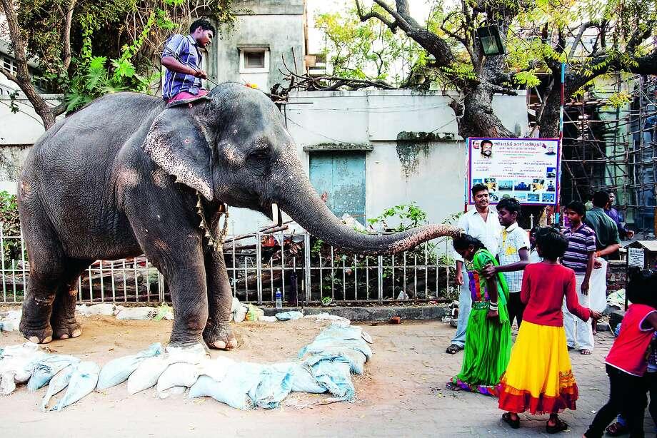 Lakshmi, the blessing elephant, in Pondicherri. Photo: Manos Chatzikonstantis