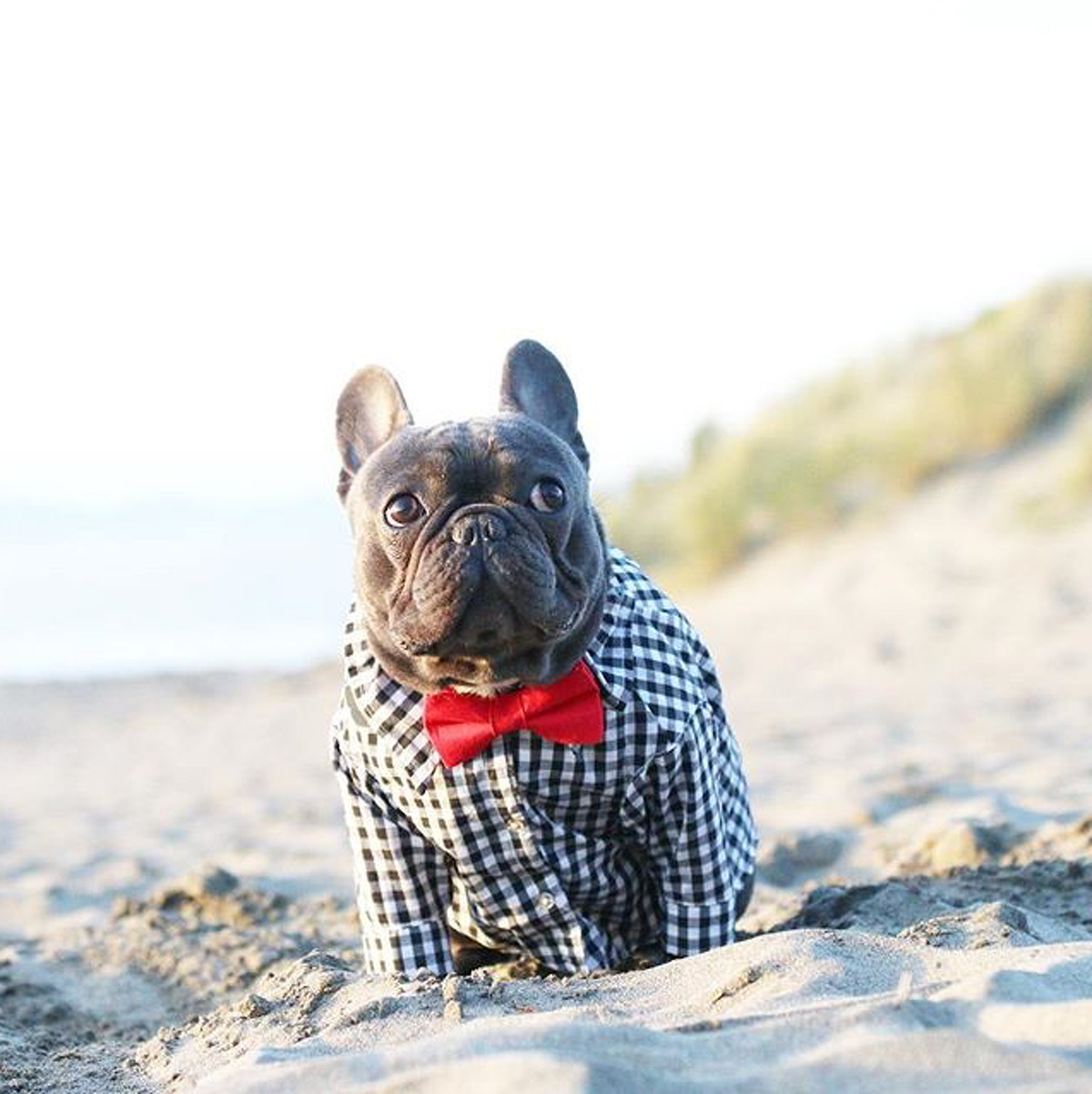 @tokifrenchie shows its OK to be dressed up at Ocean Beach in San Francisco.