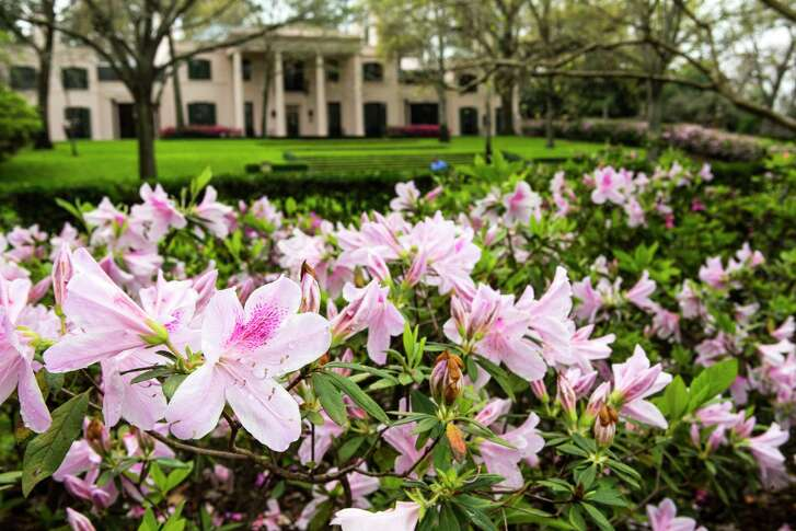 Azaleas grace the gardens at Bayou Bend, which is along this year's Azalea Trail route.