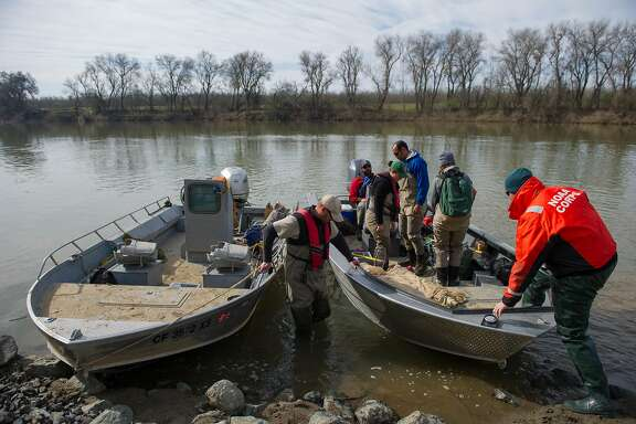 Chris McKibbin, center, district fishery biologist with the California Department of Fish and Wildlife, holds the boats ahead of a project where staff and contractors with the California Department of Fish and Wildlife and the California Department of Water Resources rescue fish trapped in small pool near the Feather River in Gridley, Calif on Friday, March 3, 2017.