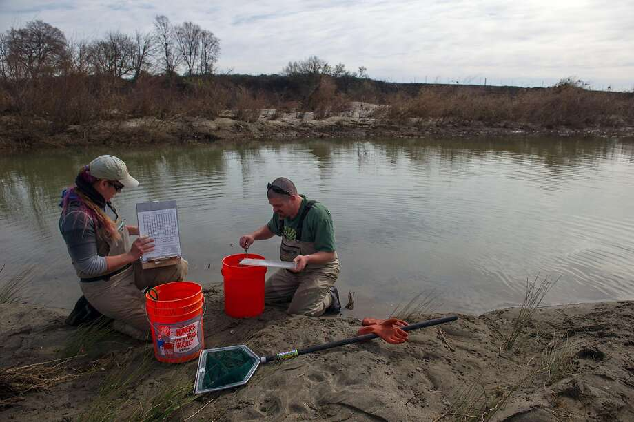 Department of Water Resources contract biologist, Alana Imrie, left, and Kevin Moncrief, scientific aide with the California Department of Fish and Wildlife, count and measure fish during a project where staff and contractors with the California Department of Fish and Wildlife and the California Department of Water Resources rescue fish trapped in small pool near the Feather River in Gridley (Butte County). Photo: Chris Kaufman, Special To The Chronicle