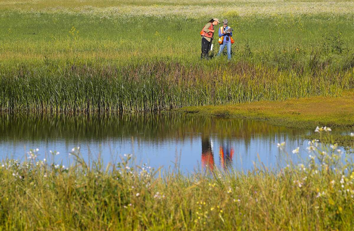 Wetlands on the edge of San Pablo Bay in Novato, California.