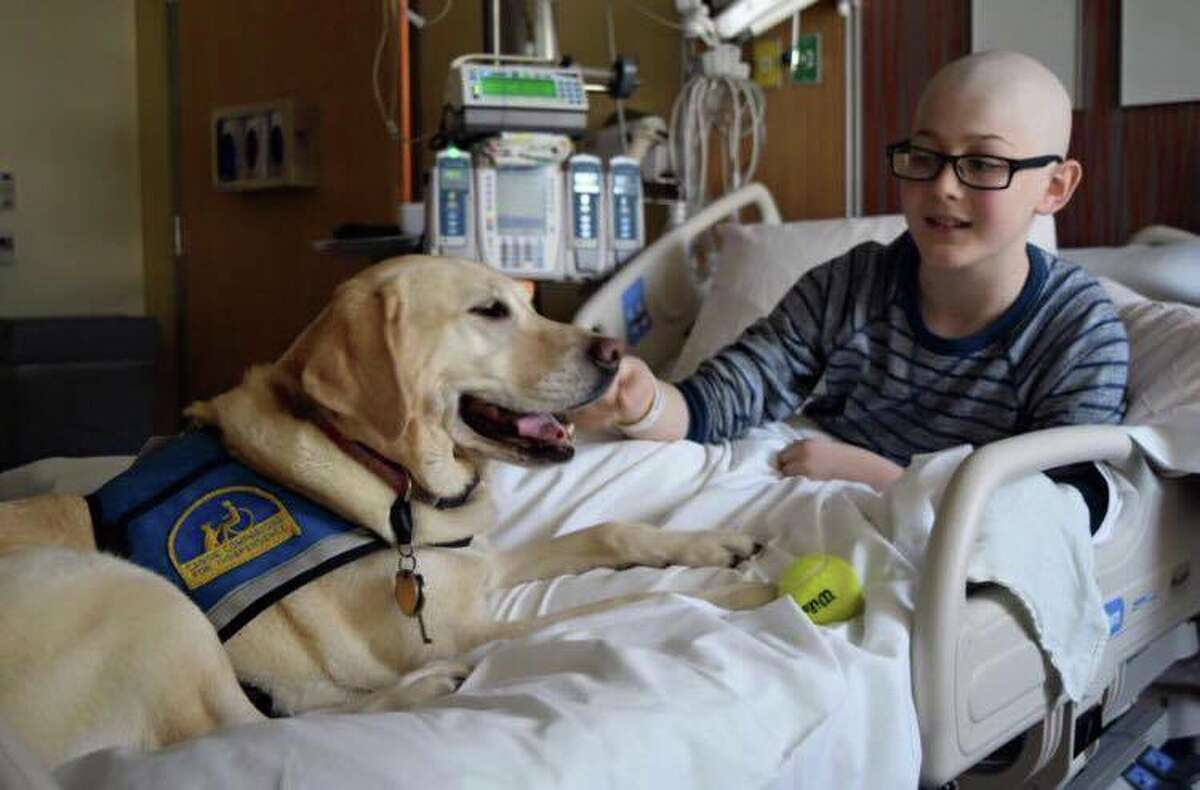 QuinnScharnin the hospital with a service dog.