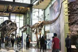 Folks who want to check out the Witte Museum's recent upgrade on a budget might want to come by on Tuesdays, when general admission is free from 3 to 8 p.m.