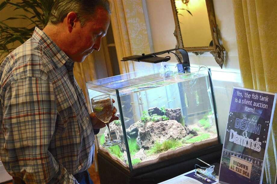 "Brad Dansher of Darien considers bidding on an aquarium at the Darien Community Association's ""Denim & Diamonds"" fundraiser, Saturday, Mar. 5, 2017, in Darien, Conn. Photo: Jarret Liotta / For Hearst Connecticut Media / Darien News Freelance"