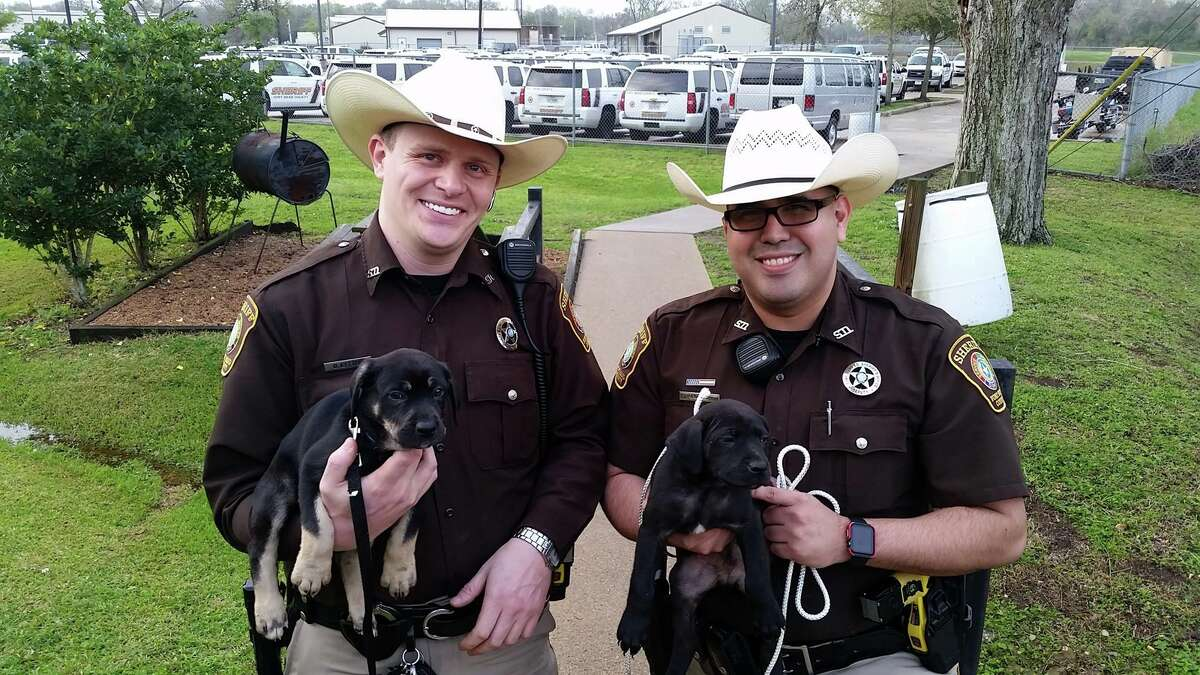 Fort Bend County deputies D. Lytton and M. Anciso are doing their part to make Monday better by adopting tiny puppies from the side of the road. SLIDESHOW: Top male and female names for dogs