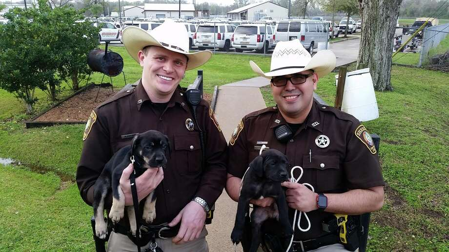 and female names for dogs photo fort bend county sheriff 39 s office