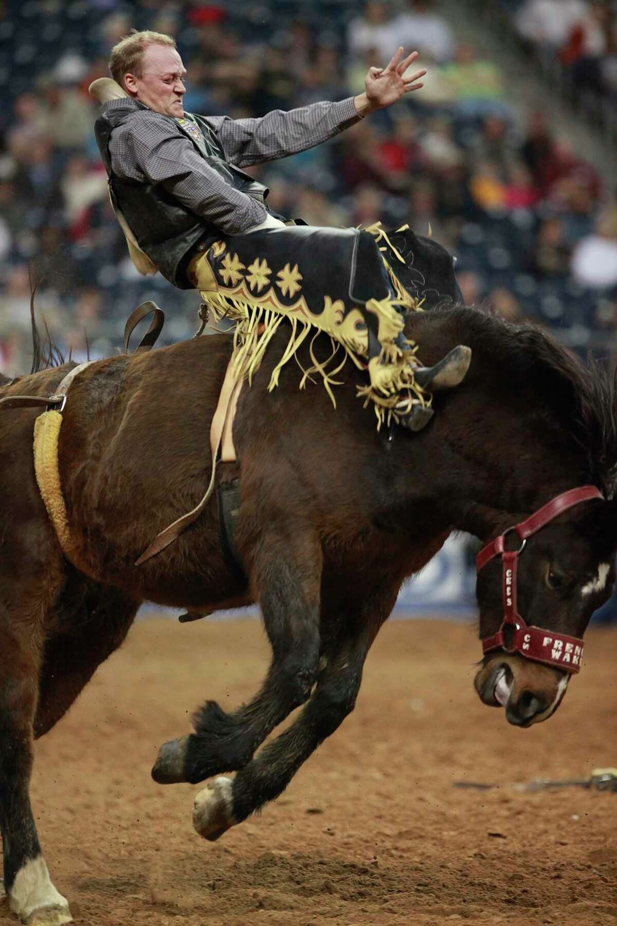 Betcha a buck that you can't answer all these questions. Russ Hallaby competes in the Bareback Riding in the Rodeo Livestock Show and Rodeo Super Series kicks off tonight at Reliant Stadium on March 2, 2010 in Houston, TX. Photo by Mayra Beltran / Houston Chronicle