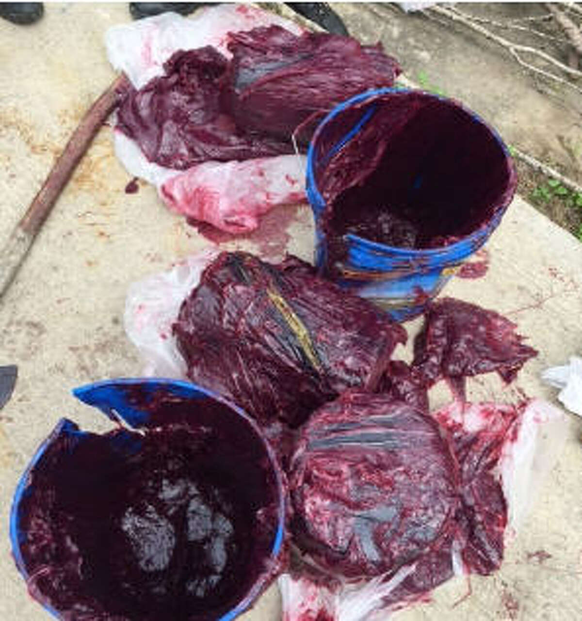 Greasy buckets bust Border Patrol agents said two men tried to sneak $459,000 worth of cocaine and marijuana into the U.S. in buckets of grease. The drugs and men were turned over to the Drug Enforcement Administration.
