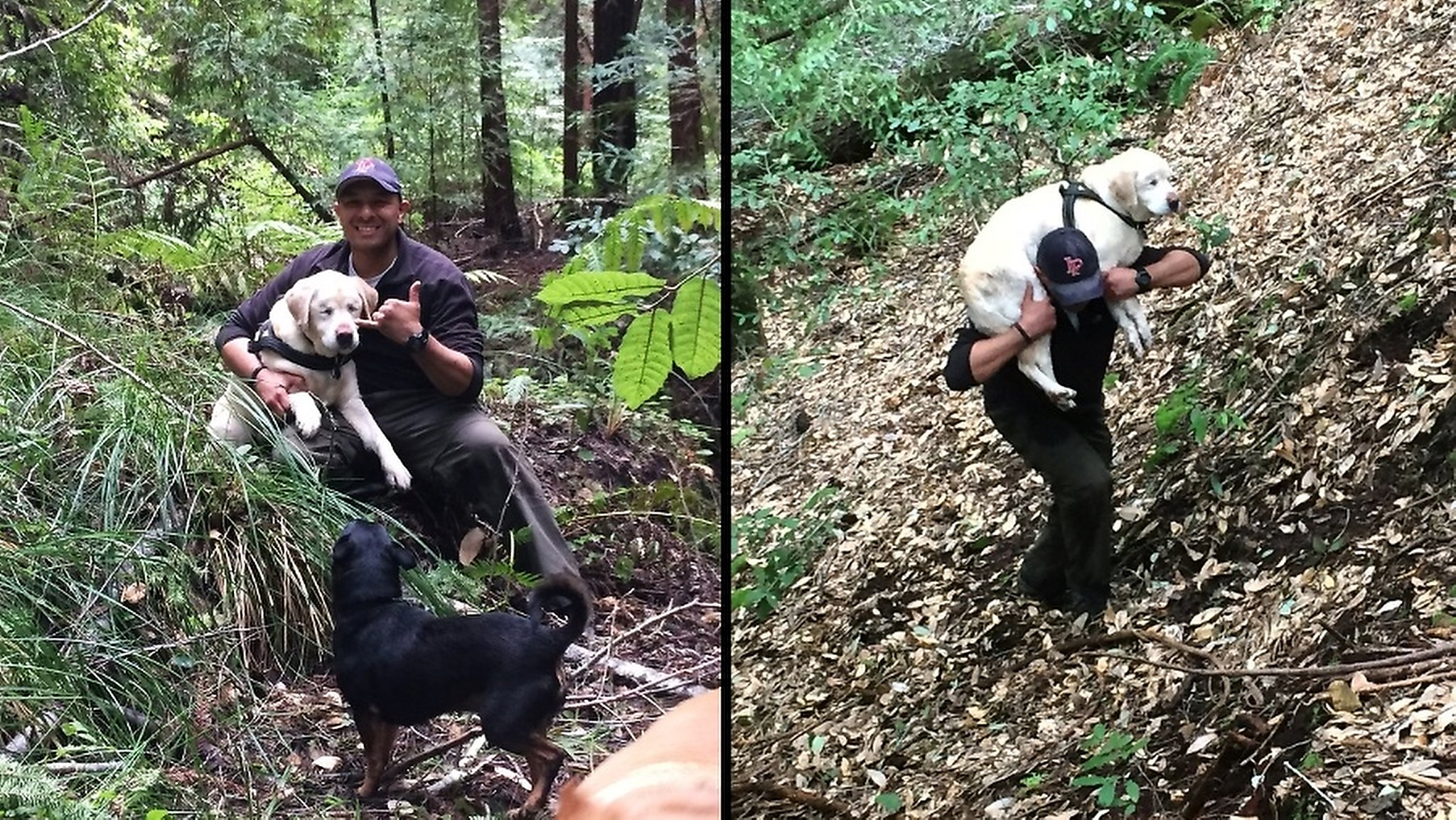Blind Lab miraculously rescued after 8 days in Santa Cruz Mountains