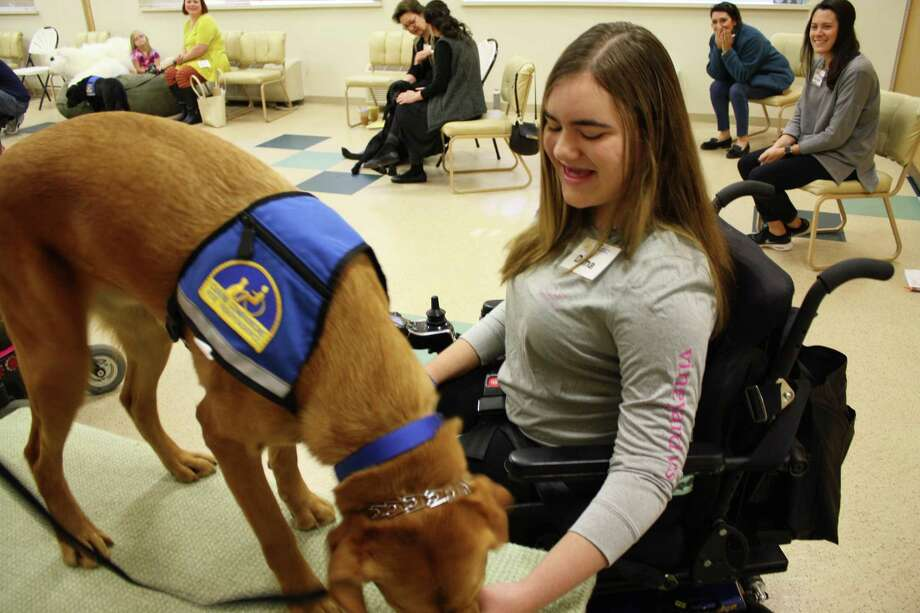 Dana Parrott, 14, of Milford, has a new assistance dog from Canine Companions for Independence.  Zinc is a two-year-old yellow lab/golden retriever cross who has been trained to respond to over 40 commands. such as turning light switches on and off, opening and closing doors and retrieving dropped objects. Photo: Contributed Photo / Connecticut Post