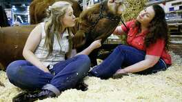 Chasitie Evans, 16, left, and her mom, Johannie Evans, right, pet and cuddle with Cinnamon Bun the cow on the opening day of the Houston Livestock Show and Rodeo Tuesday, March 7, 2017 in Houston.