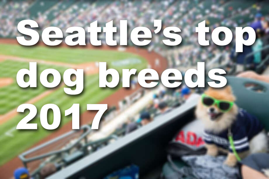 We dug through Seattle Animal Shelter data to find the most popular dog breeds among registered pups in the city. Check out whether your dog won the popularity contest. Photo: Seattlepi.com