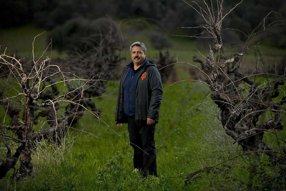 Rob Campbell, owner of Story Winery in Plymouth (Amador County) in his Mission vineyard. Few Mission vines remain, but Story Winery has about an acre remaining of vines planted in 1894.