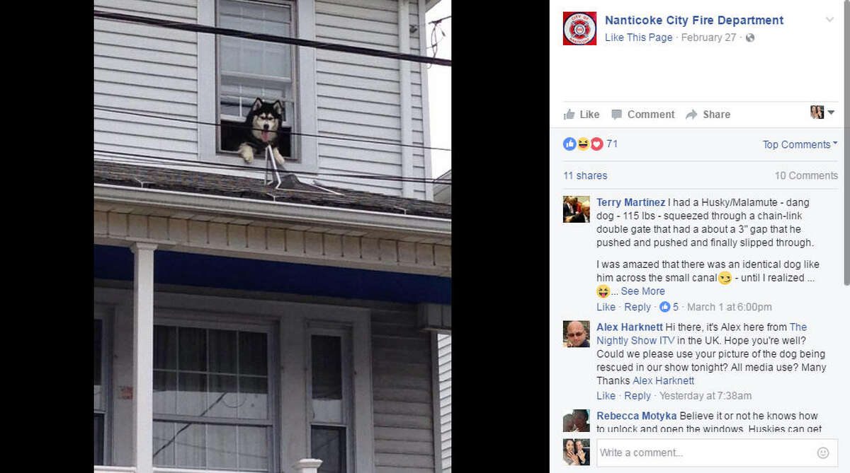 Firefighters responded a public assist call for a dog on a roof. They were able to get the dog back in,but about an hour later, firefighters received another call to same location. Photo: Nanticoke City Fire Department Facebook