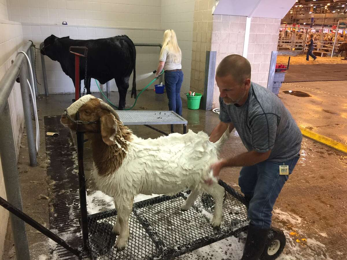 Slow Ride gets a bath from owner Joshua Kerr of Sherman.