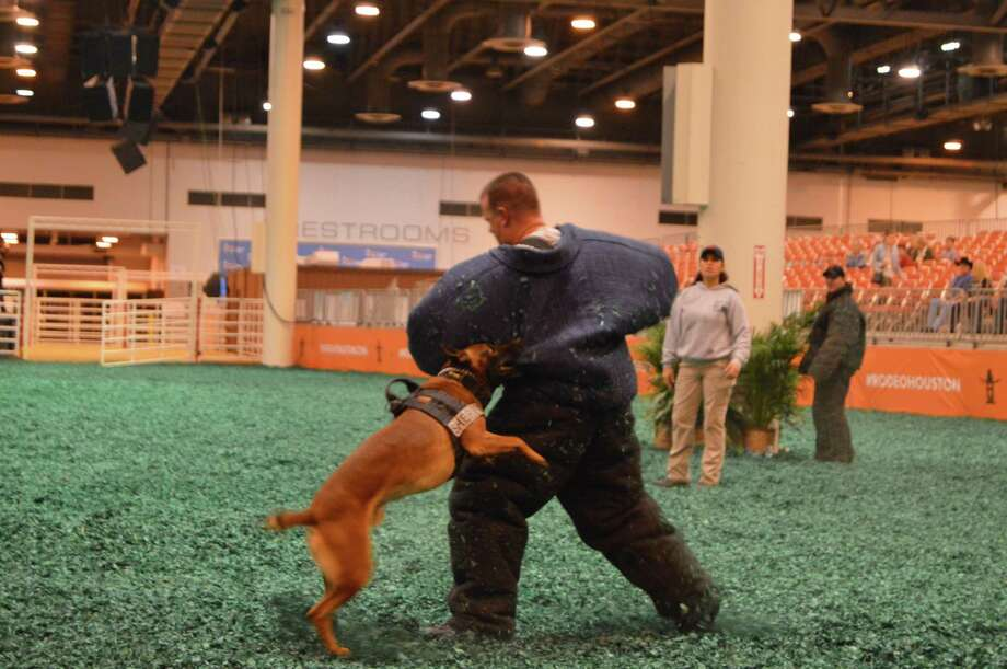Police canines compete at RodeoHouston's K9s4COPs Hard Dog/Fast Dog Championship on Tuesday, March 7, 2017. Photo: Andrew Kragie/Houston Chronicle, Houston Chronicle